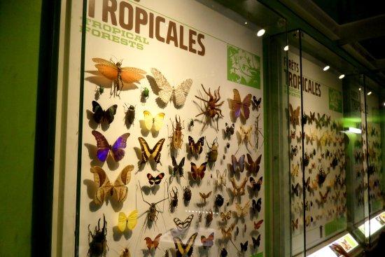 Montreal, Kanada: Une des multitudes d'insectes à découvrir dans l'Insectarium.