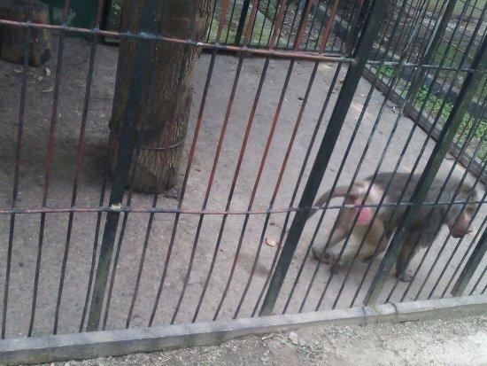 Pleven Zoo