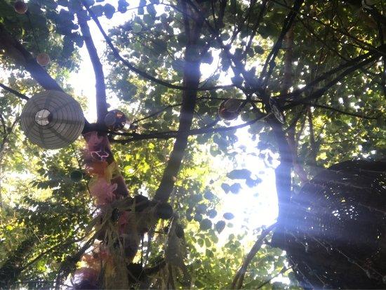 Cici Sirince Mutfagi: Işık hüzmesi