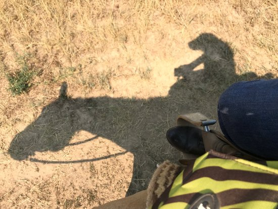 Saddleback Ranch: photo0.jpg