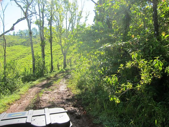 ATV Adventure Tours Costa Rica : Adventure Tours Costa Rica ATV rainforest adventures