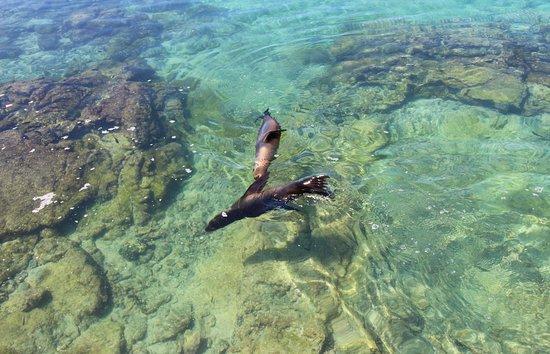 Puerto Villamil, Ekuador: Sea Lion