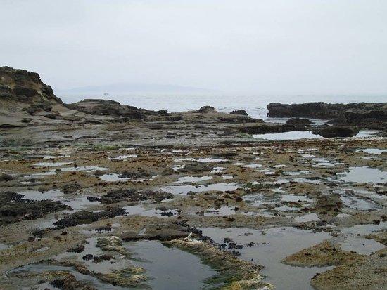 Port Renfrew, Canada: lots of tide pools