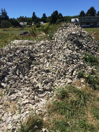 Oysterville, Etat de Washington : Oyster shells