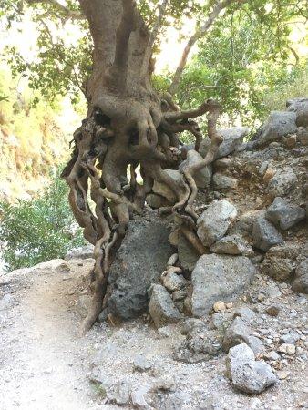 Agia Irini Gorge: photo3.jpg