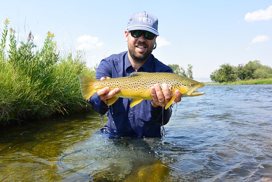 Sheridan, MT: A dandy butterball brown from the Madison River!