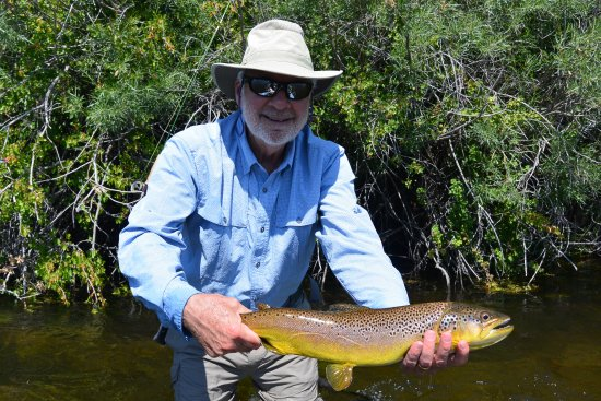 Sheridan, MT: A large Beaverhead River brown trout taken on size #18 nymph