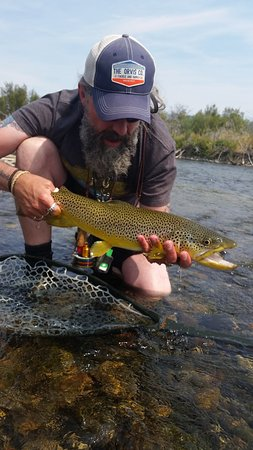 Sheridan, MT: A big beefy brown taken on a streamer on the Madison River