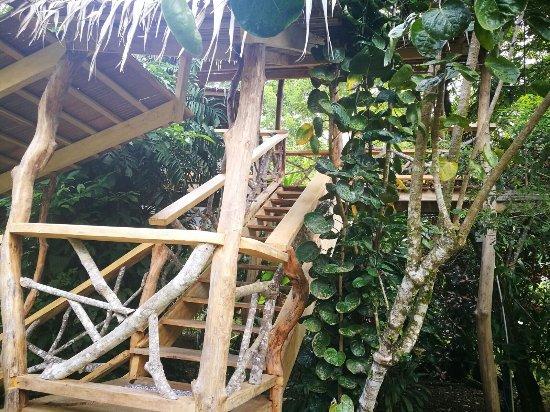 3 Bamboo: photo0.jpg