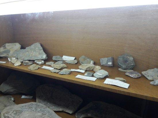 Museu de Ciencias Naturais Sylvio Ourique Fragoso