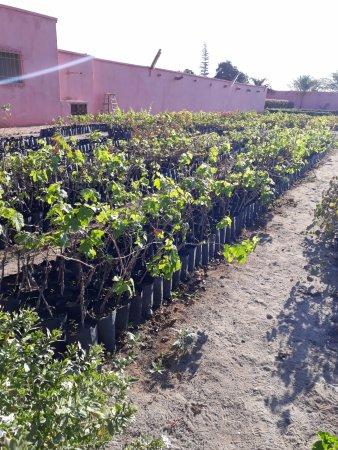Almacigo de plantas jovenes - Picture of Tacama, Ica