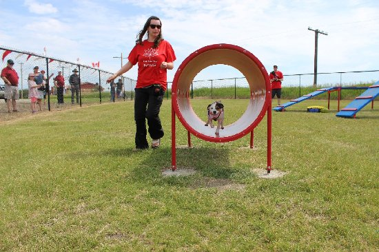 Blackfalds, Canada: agility demonstration at Grand Opening of Bark Park
