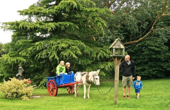 Treglown House: Paddy the donkey with guests