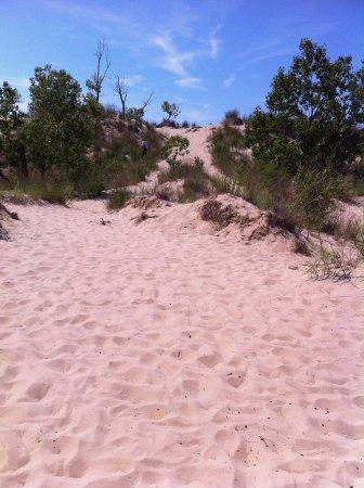 Sand dunes near Saugatuck.