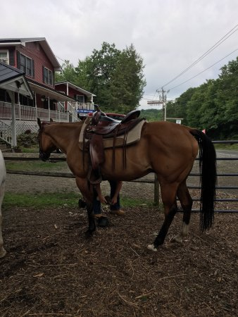 East Otis, MA: fun horseback riding