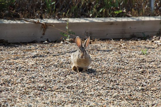Brooks, Canada: Bunny at the playground.