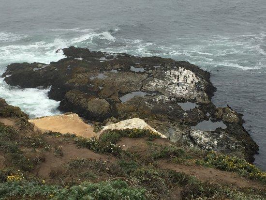 Point Reyes Seashore National Park: Tamale Point