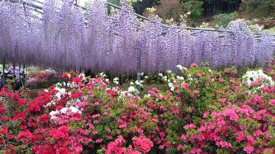 ashikaga flower park - all you need to know before you go