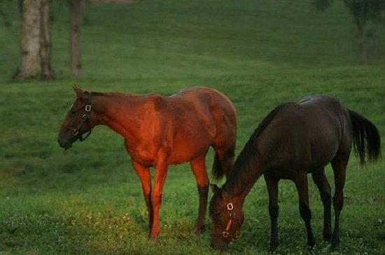 Thoroughbred Horse Farm Tour in...