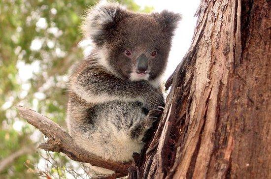 Island Life - Full Day Kangaroo...