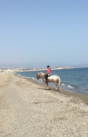 Horse Park Rethymno: photo6.jpg