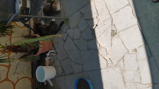 Tala, Κύπρος: 20170801_112923_large.jpg