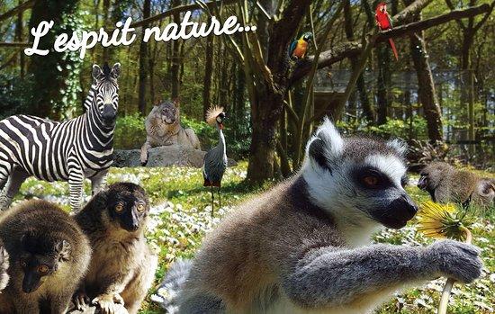 Parc Animalier Saint Martin