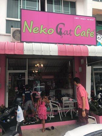 Дружелюбные котятки и сладкие пироженки