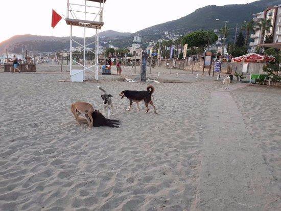 Kleopatra Life: Пляж 22