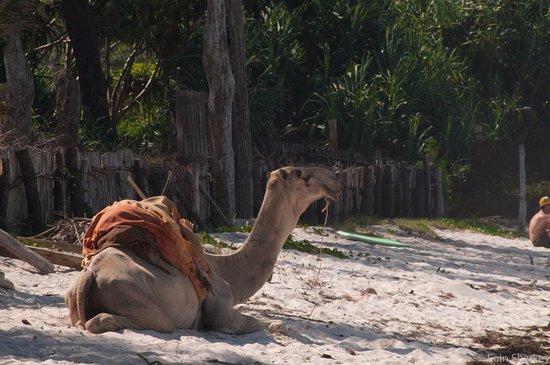 Diani Blue: On beach entertainment