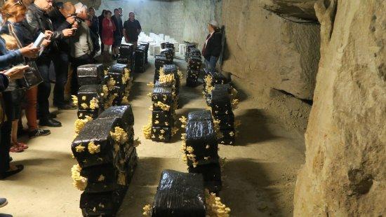 Les Caves Champignonnieres des Roches