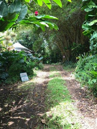 Luana Spa Retreat: Late July visit to Hana: pathway to Luana Spa, view, landscaping