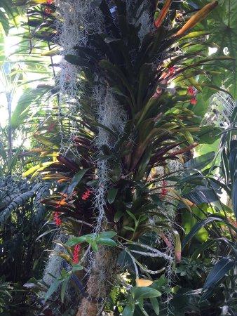 Dunedin Botanic Garden: photo3.jpg