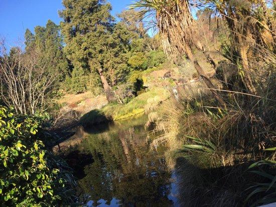 Dunedin Botanic Garden: photo5.jpg