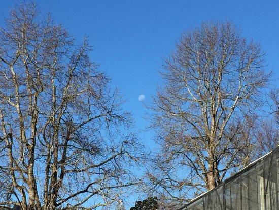 Dunedin Botanic Garden: photo6.jpg