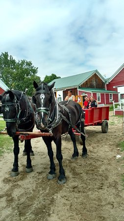 ‪‪Farm by the River Bed and Breakfast with Stables‬: Wagon Ride‬