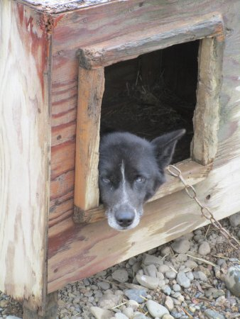 EarthSong Lodge - Denali's Natural Retreat: Im Schlittenhund - Kennel