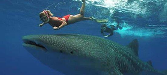 Dolphin tours in a bikini