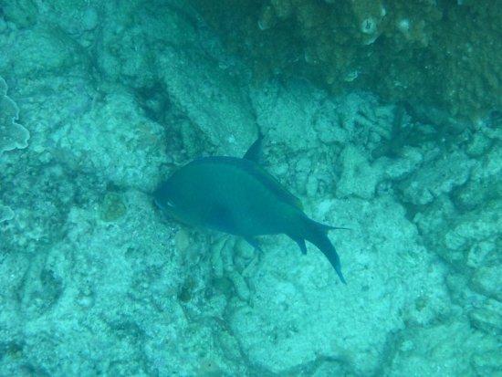 Lady Elliot Island, Australien: photo4.jpg
