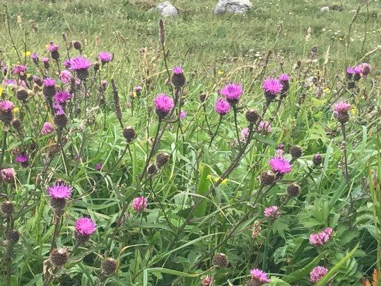 Heart of Burren Walks: photo9.jpg