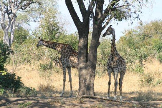 Imbali Safari Lodge: Vista dalla terrazza ristorante