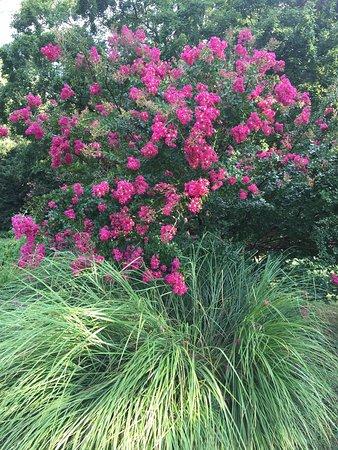 Tanger Family Bicentennial Garden Greensboro Nc Top Tips Before You Go With Photos