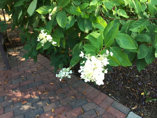 Picture Of Tanger Family Bicentennial Garden Greensboro Tripadvisor