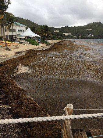 Divi Carina Bay All Inclusive Beach Resort: photo4.jpg