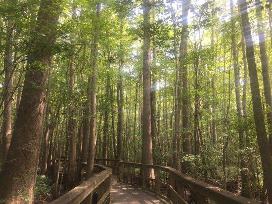 Windsor, Северная Каролина: Cashier wetland