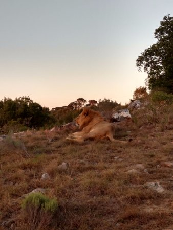 Kenton-on-Sea, South Africa: Awesome game viewing on our morning game drive.