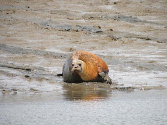 Harwich Port, MA: Sealwatching