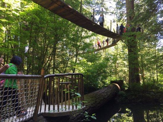 Норт-Ванкувер, Канада: Treetops Adventures.