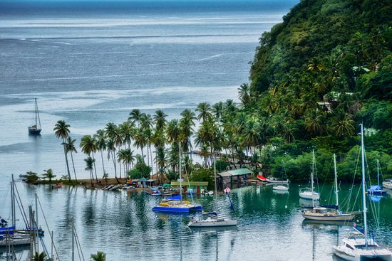 jungle fog - Picture of Island Man Tour and Taxi Service -Private
