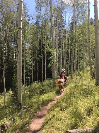 Snowmass Creek Outfitters: My favorite Aspen groves!